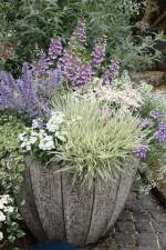 Vielfältig bepflanzte Kübel (c) Kientzler
